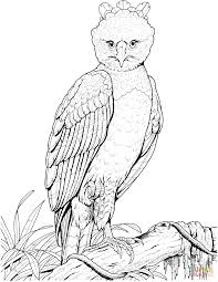 Small Picture Harpy Eagle coloring page Free Printable Coloring Pages
