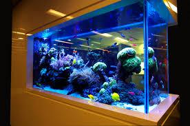 Aquarium Design For Flowerhorn Aquariums Ponds Design Installation Best Delhi Fish