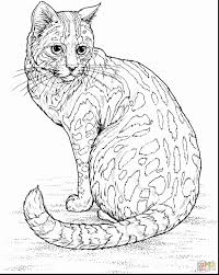 Adult Coloring Pages Cat Futuramame