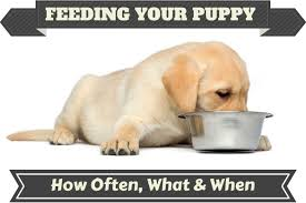a puppy feeding from a metal bowl