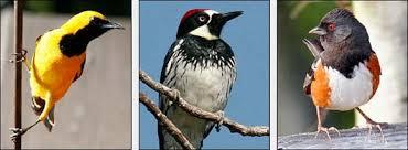 Bring On The Birds Home California Bird Identification