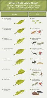 garden pest. Uprooting Garden Pests Pest