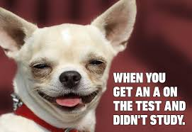 Hilarious Dog Memes You'll Laugh at Every Time | Reader's Digest