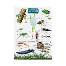 Field Guide Garden Bugs Beasties Laminated Insect