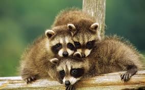 baby animals wallpapers.  Animals Baby Animal Inside Animals Wallpapers