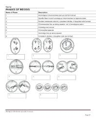 Comparing Mitosis And Meiosis Venn Diagram Mitosis Vs Meiosis Chart Worksheet Answers The Cell Cycle Functional