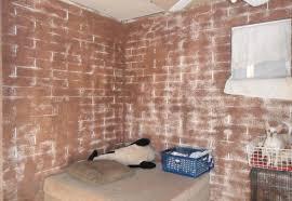 two chihuahua dogs in a basket bad faux distress brick paint job mesa arizona home