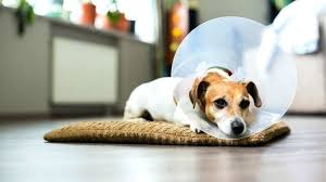 diy dog cone as you might already know there are alternatives that can if nothing else
