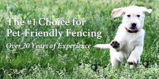 outdoor dog gates home depot fence best friend fencing systems outdoor dog gates