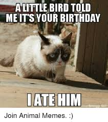 grumpy cat birthday bird. Wonderful Cat Grumpy Cat Bird And Told Me A LITTLE BIRD TOLD ME ITu0027S YOUR And Cat Birthday Bird