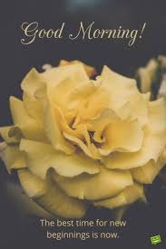 Good Morning Quote About New Beginnings On Picture With Yellow Rose