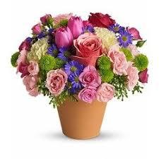 birthday flowers see more spring sonata
