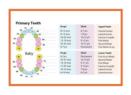 Teeth Numbers Chart Usa 6 Teeth Numbers Chart Divided Into 4 Quadrants Teeth