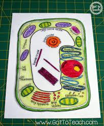 anatomychartee co takken shrinky d