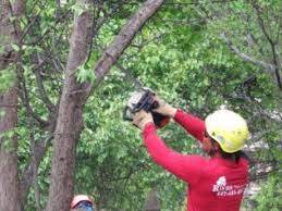 Image result for tree trimming pictures