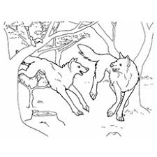 Click on the link below each image to download. Top 15 Free Printable Wolf Coloring Pages Online
