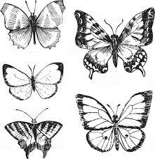 セットの蝶 イラストレーションのベクターアート素材や画像を多数ご