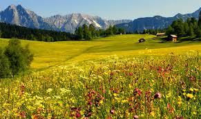 Чем поле отличается от луга и в чем сходства В чем разница Цветочный луг