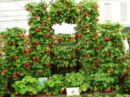 amazing strawberries planter from old pallets