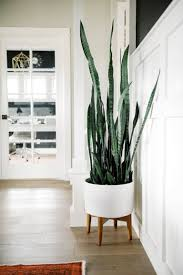One Room Challenge Snake Plant Snake And Planters