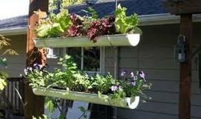 hanging herb gutter garden