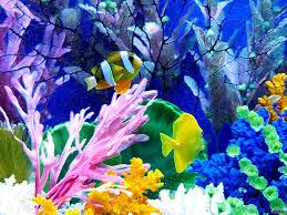 wallpapers : Aquarium Wallpapers