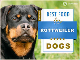 Rottweiler Puppy Diet Chart Best 6 Foods To Feed Your Adult And Puppy Rottweiler 2019