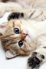 cute kittens wallpapers for mobile.  For Download Now With Cute Kittens Wallpapers For Mobile