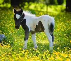 beautiful baby horses wallpaper. Wonderful Horses 1600x1200  Throughout Beautiful Baby Horses Wallpaper U