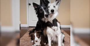 adorable dog siblings that just love to hug get a puppy brother and things just can t get any cuter