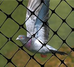 garden bird netting. The Bird Populations Pluck Fruit Seriously. To Avoid Harm, We Can Install Garden Netting Make Birds Can\u0027t Fly Into Garden.
