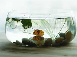 Decorative Fish Bowls Wholesale Decorative Clear Round Large Glass Fish Bowl Buy Large 4