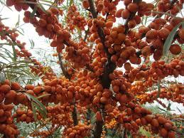 Kumquat Tree Stock Images RoyaltyFree Images U0026 Vectors Small Orange Fruit On Tree