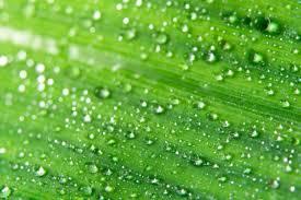 textura verde textura verde vectors photos and psd files free download
