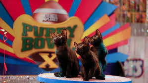 puppy bowl x halftime show. Fine Puppy During The Puppy Bowl Kittens Provide Halftime Entertainment Throughout Puppy Bowl X Halftime Show Y