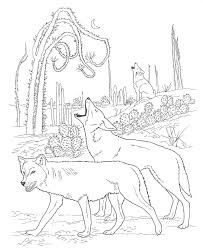 Small Picture Free Printable Coyote Coloring Pages For Kids