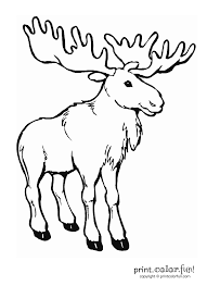 Cute Moose Coloring Pages - GetColoringPages.com