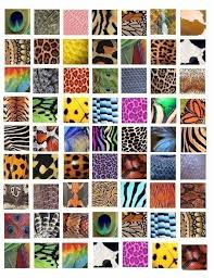 Animal Patterns Custom Animal Insect Skin Textures Patterns Clip Art Collage 48 Inch Squares