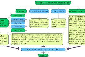 Akdn Organizational Chart Ismailimail Page 69 Https Ismailimail Blog
