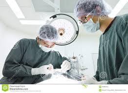 Operation Room Technician Two Veterinarian Surgeons In Operating Room Editorial Photography