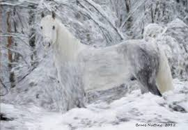 white horses in snow. Modren Horses White Painting  Horse In The Snow By Bruce Nutting With Horses E