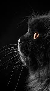 cat wallpaper iphone 6. Beautiful Iphone Black Cat Closeup With Cat Wallpaper Iphone 6 D