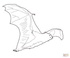 Bat Drawing Template At Getdrawings.com | Free For Personal Use Bat ...