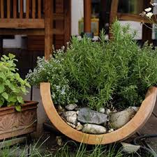 container gardening. Large Plants Growing In Containers Container Gardening