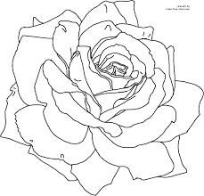 2400x2311 knumathise realistic rose drawing outline images