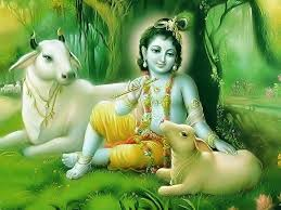 Image result for krishna god with cows