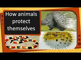 Science How Animals Protect Themselves English Youtube