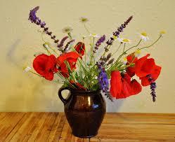 Images Gratuites La Nature Fleur Printemps Rouge Flore
