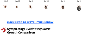 Tick Growth Comparison