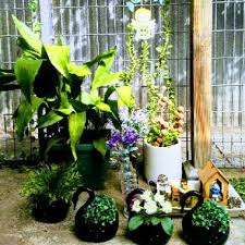 Hina (@hina.imtiaz) - View their garden and plant collection on GardenTags